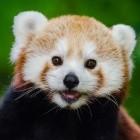 Browser: Mozilla startet bezahlten Enterprise-Support für Firefox