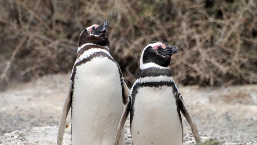 Der Linux-Kernel 5.3 ist erschienen.