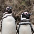 Kernel: Linux 5.3 unterstützt Navi und weiterhin Disketten