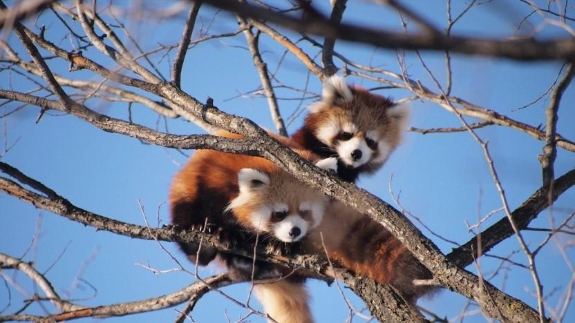 Firefox erscheint künftig schneller als bisher.