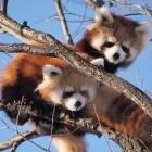 Mozilla: Firefox erscheint künftig im Vier-Wochen-Rhythmus