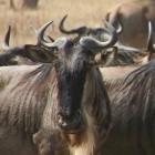 Freie Software: Richard Stallman will weiter GNU-Projektchef bleiben