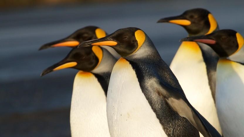 Mit Linux 5.4-rc1 stehen die Funktionen der kommenden Version fest.