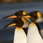 Kernel: Vorschau auf Linux 5.4 bringt viele Security-Funktionen