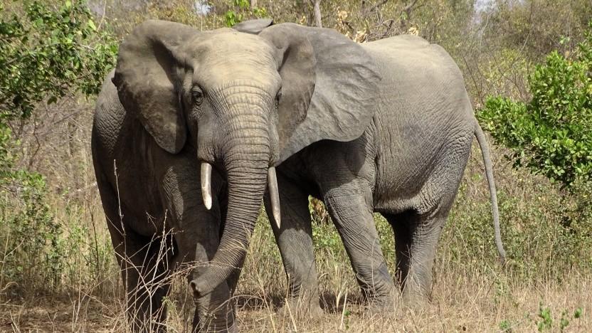 Der Elefant ist das Maskottchen von PostgreSQL.