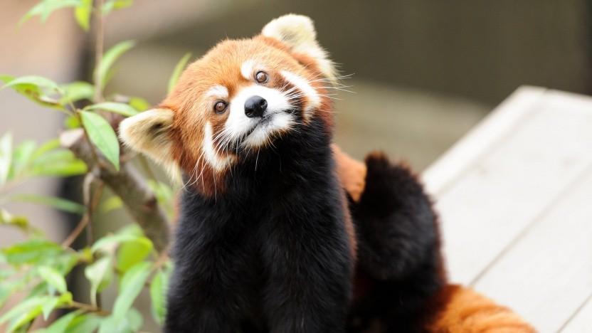 Browser: Mozilla härtet Firefox gegen Code-Injection - Golem.de