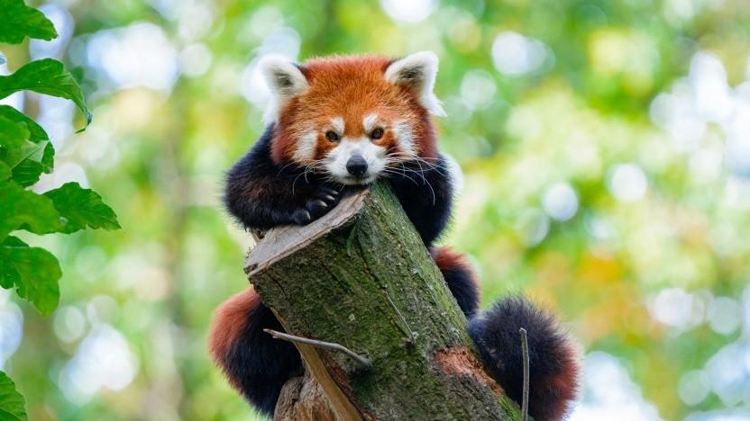 Mit dem Firefox lassen sich blockierte Tracker jetzt genauer ansehen.