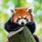 Mozilla: Firefox 70 zeigt Übersicht zu Tracking-Schutz