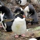 KernelCI: Der Linux-Kernel bekommt einheitliche Test-Umgebung
