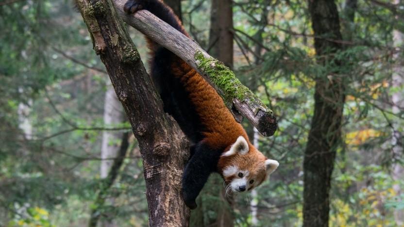 Firefox wird das Sideloading von Addons in Zukunft unterbinden.