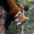 Mozilla: Firefox wird Addon-Sideloading künftig verhindern