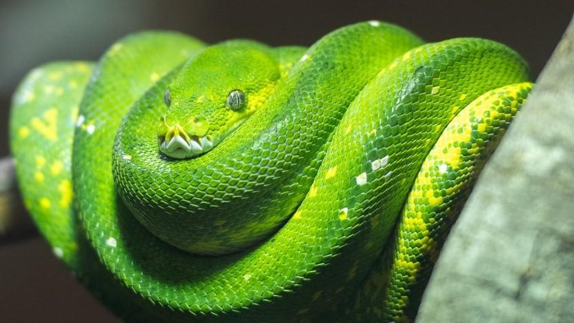 Python erscheint künftig jährlich.