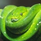 Programmiersprache: Python verkürzt Release-Zyklus auf ein Jahr