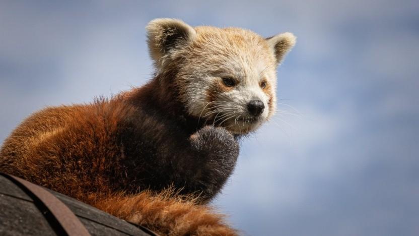 Firefox-Nutzer sollen von Berechtigungs-Pop-ups weniger genervt werden.