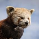 Mozilla: Firefox soll Benachrichtigungs-Pop-ups unterdrücken