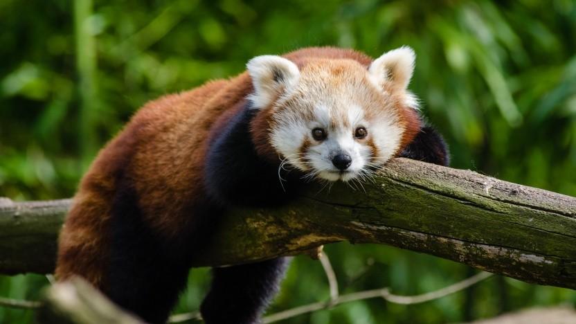 Die Nightly-Version des Firefox kann HTTP/3.