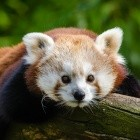 Mozilla: Firefox Nightly unterstützt HTTP/3-Experimente