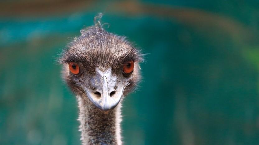 Der Emu ist das Maskottchen von Qemu.
