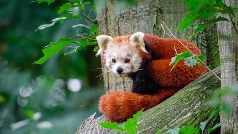 Firefox braucht nun kein XBL mehr.
