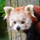 Mozilla: Firefox-UI nutzt nun Web-Technik