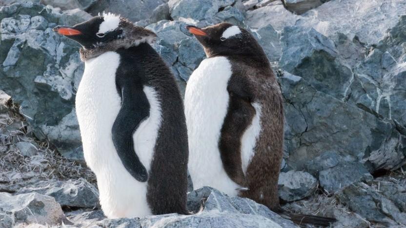 Linux 5.4 ist verfügbar.