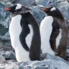 Betriebssystem: Linux 5.4 erscheint mit Kernel-Lockdown und Exfat-Treiber