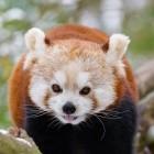 Mozilla: Firefox 71 bringt Picture-in-Picture und Kiosk-Mode
