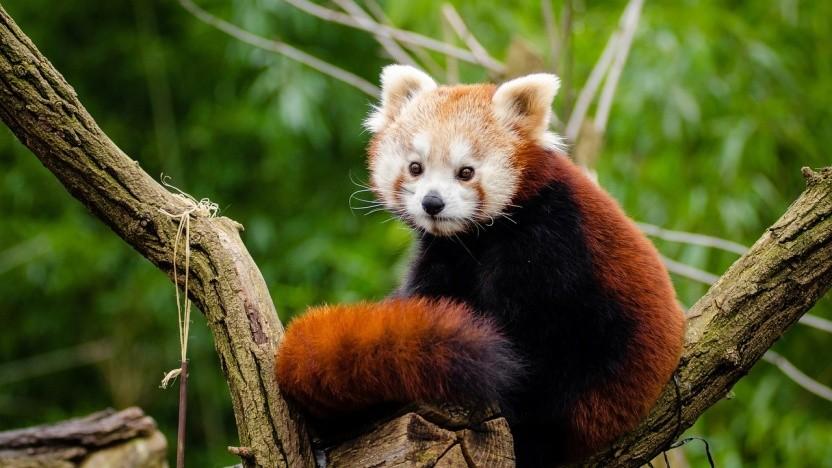 Der Firefox erhält einen weiteren TRR für DoH.