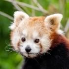 DNS über HTTPS: Mozilla gewinnt NextDNS als weiteren DoH-Anbieter