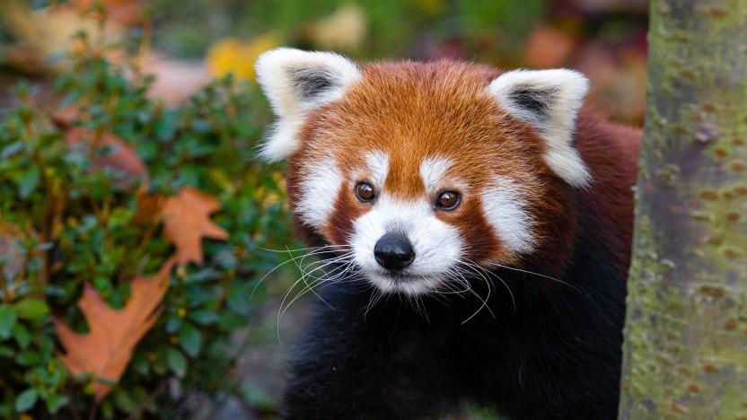 Die Mozilla-Community und Firefox-Macher nutzen künftig Matrix und Riot.
