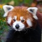 Chat: Mozilla wechselt von IRC auf Matrix und Riot