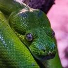 Programmiersprache: Python 2.7 bekommt letztes Release im April 2020