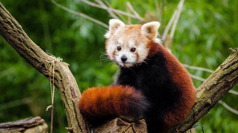 Firefox 72 ist erschienen.
