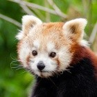 Mozilla: Firefox 72 unterdrückt Benachrichtigungs-Pop-ups