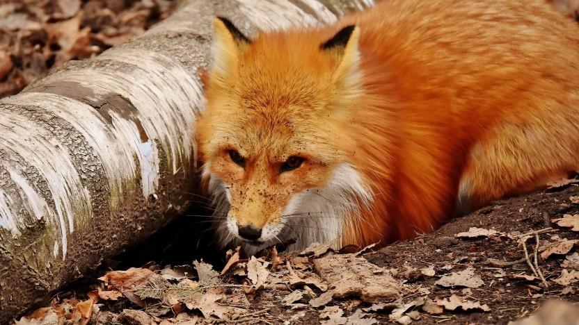 Mozilla schließt eine Sicherheitslücke in Firefox.