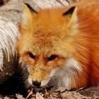 Schnell updaten: Sicherheitslücke in Firefox wird aktiv ausgenutzt