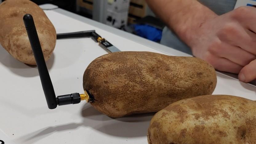 Der Neuraspud verbindet die Kartoffel mit einem Smartphone.