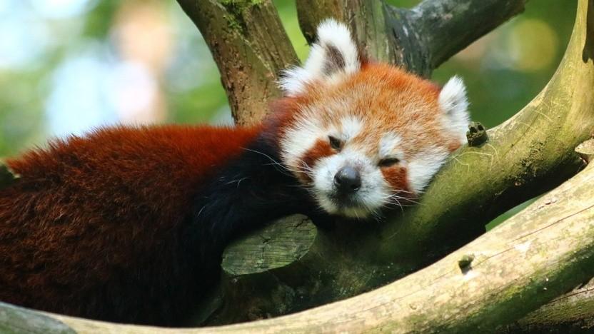 Firefox verliert immer mehr Marktanteil, das macht sich wohl auch am Umsatz von Mozilla bemerkbar.