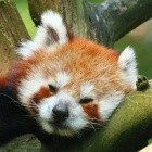 Entlassungen: Mozilla hat Probleme mit alternativen Geschäftsmodellen