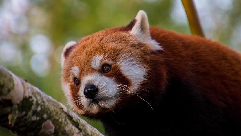 Firefox-Nutzer bekommen unter Android bald einen völlig überarbeiteten Browser.