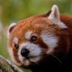 Mozilla: Neuer Firefox für Android kommt als Nightly
