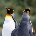 Kernel: Linux 5.5 bringt Wireguard-Unterbau