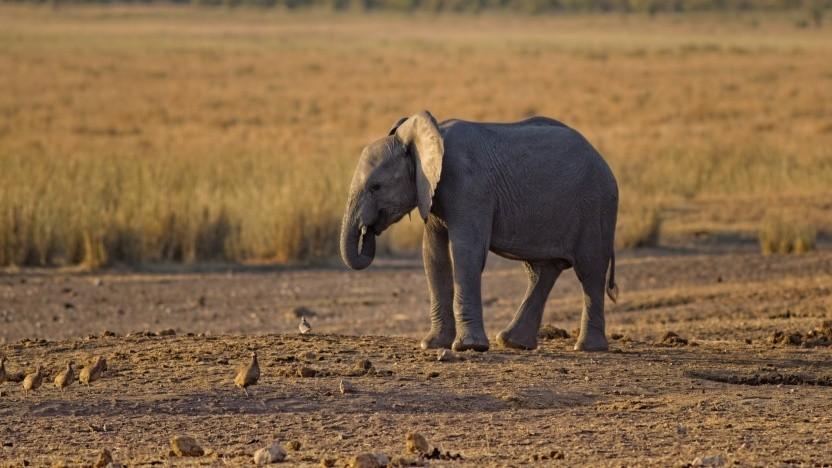 Das Maskottchen von PHP ist ein Elefant.