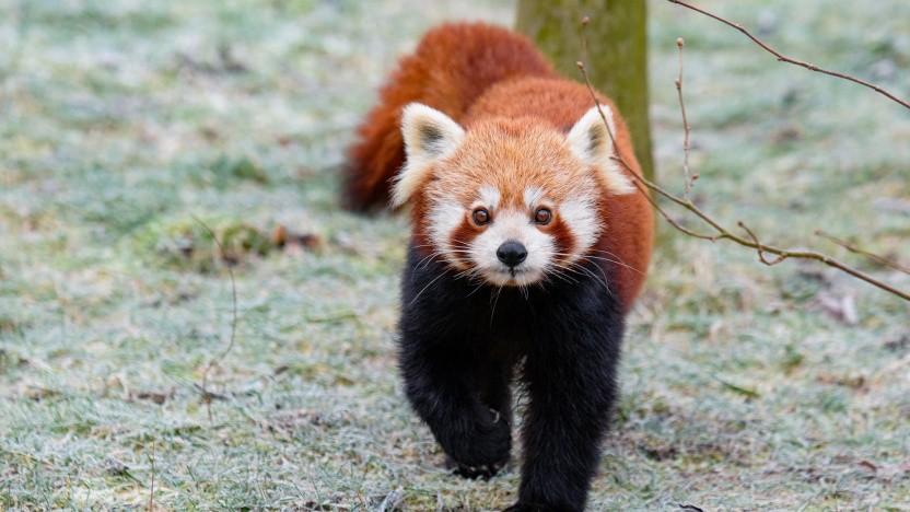 Der Firefox-Browser ist in Version 73 verfügbar.
