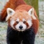 Mozilla: Firefox 73 bietet NextDNS für DoH und mehr Barrierefreiheit