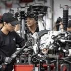 Gigafactory: Grüne kritisieren Grüne Liga wegen Baumfällstopp für Tesla