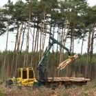 Grünheide: Tesla-Wald darf weiter gerodet werden