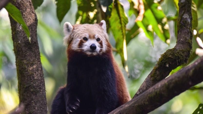 DoH wird nun endgültig zum Standard im Firefox - zumindest in den USA.