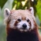 Mozilla: Firefox-Nutzer in den USA bekommen alle DoH