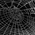Golem Akademie: IT-Sicherheit für Webentwickler